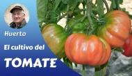 El cultivo deltomate