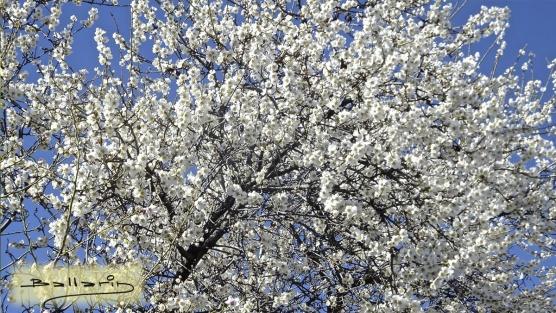 Se anuncia la primavera