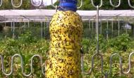 Como atrapar los insectos del huerto de manera ecológica (video-tutorial)