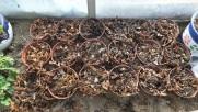 Macetas cubiertas con hojas1
