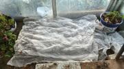 Tapadas con manta térmica