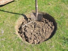 Preparando el hoyo (50cm x 40cm)