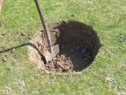 Preparando el hoyo (50cm x 40c