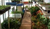 Como hacer semilleros. Huerto y Jardín (1ªparte)