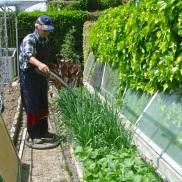 Regando el semillero