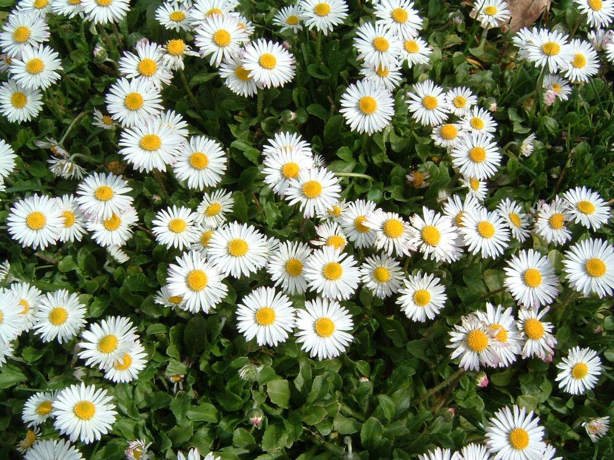 Plantar las flores de verano el huerto familiar - Flores de verano ...