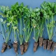 Planta hecha de semillero