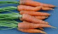 Zanahorias (fin de ciclo y nuevacosecha)