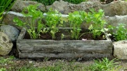 Una vez plantado