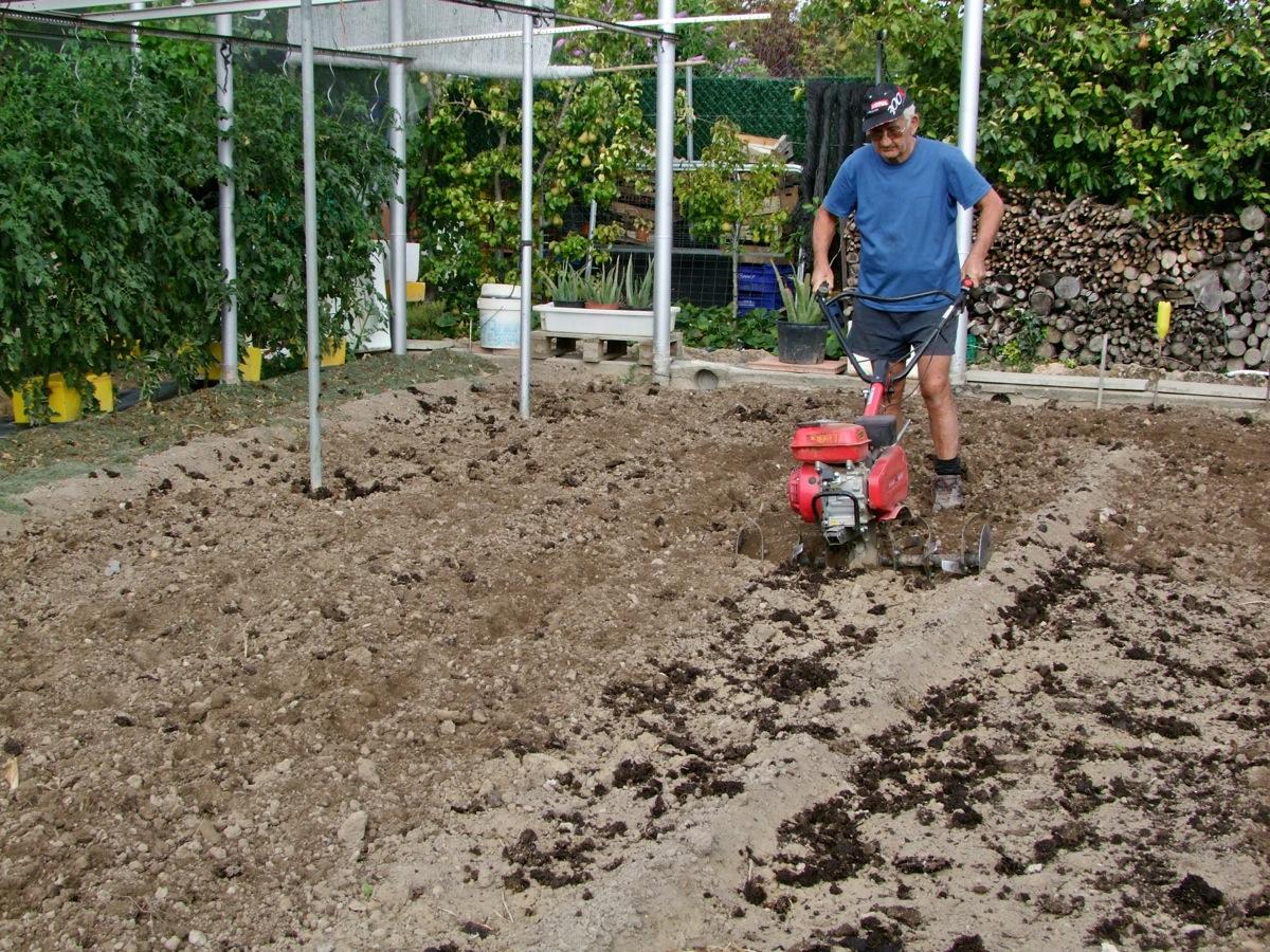 Preparaci n de la tierra para plantar coles el huerto - Preparacion de la tierra para sembrar ...