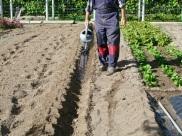2-Pequeño riego antes de plantar.