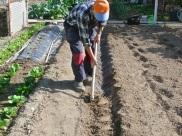 Cubriendo con tierra( 5 o 6 cm.)