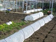 Proteger los cultivos delfrío