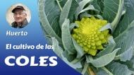 El cultivo de las coles (Video-tutorial)