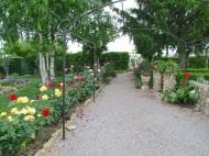 Cómo cultivar bellas rosas-Mantenimiento y cuidados de losrosales-3/6