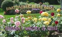 CÓMO CULTIVAR BELLAS ROSAS- 6/6-Resumen final y muestra derosas
