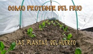Cómo proteger del frío las plantas delhuerto