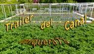 Trailer del canalmiquera73