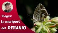 La mariposa delgeranio