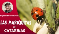 LAS MARIQUITAS OCATARINAS